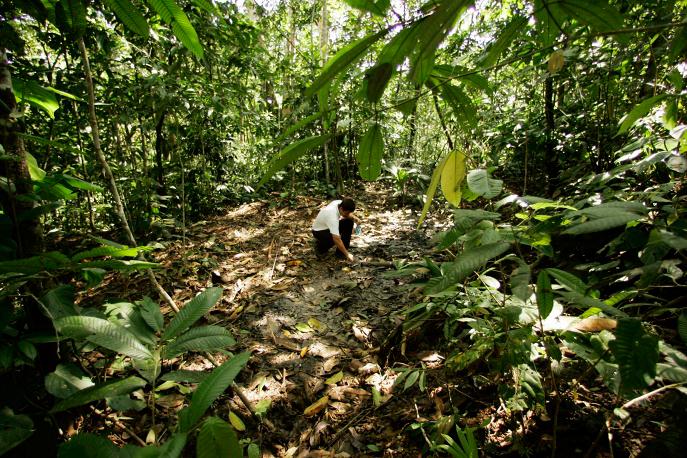 amazon rainforest issues